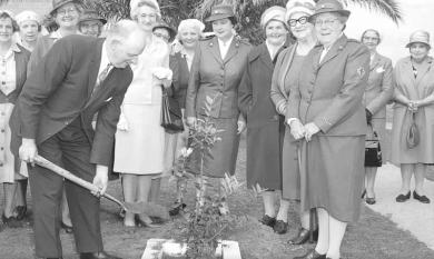 Tree planting to commemorate 50 years of Service by Chelsea Red Cross.  Mayor Cr L Payne, Mrs Payne, Mrs Moore, Mrs Mossenton, Mrs Meier and Mrs Mether [picture].